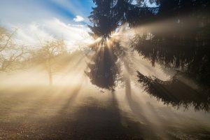 shine, sun, light-3902368.jpg